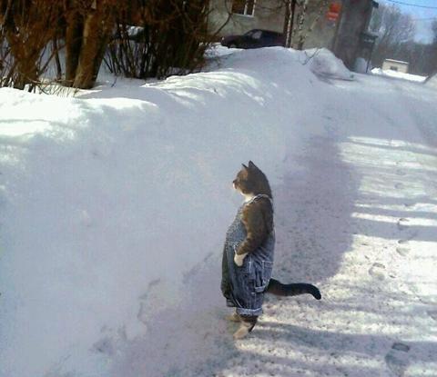 Cat Overalls