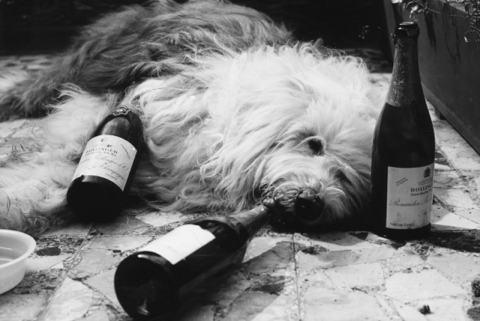 Doggy drunk