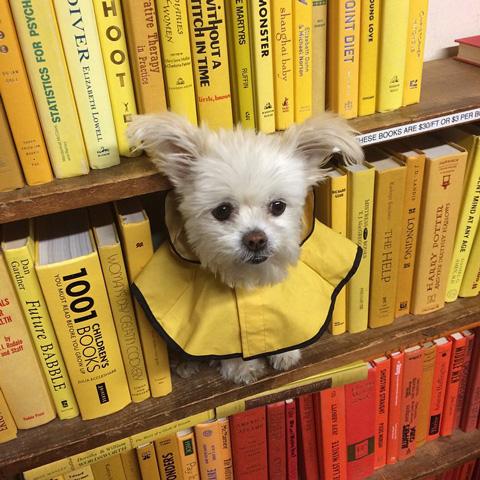 Dog at the Strand