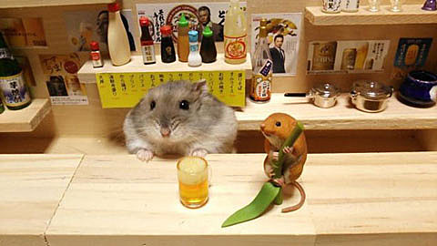 hampster bar