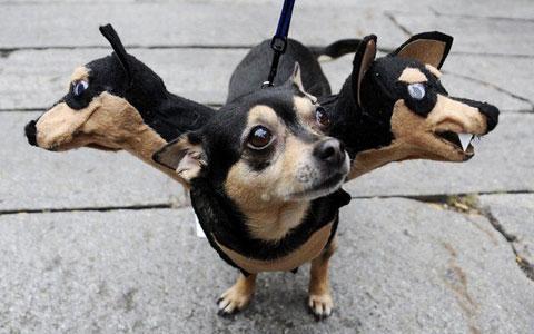 dog heads
