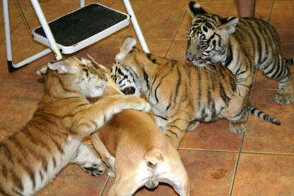 furry fight