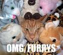 Furrys