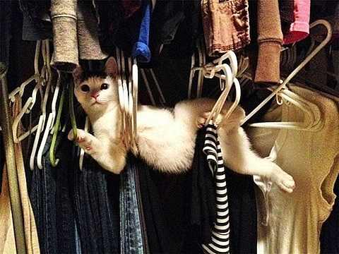cat-clothes-hangers