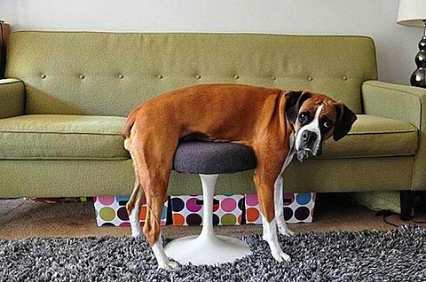 dog-couch-fail